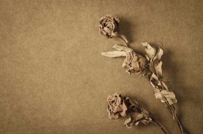close up to dried roses